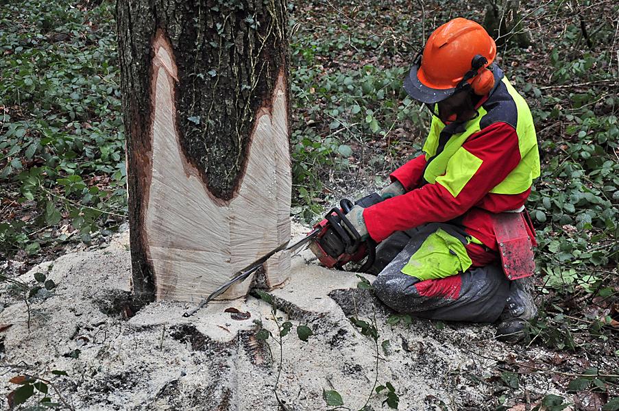 Tala (árboles) - Wikipedia, la enciclopedia libre