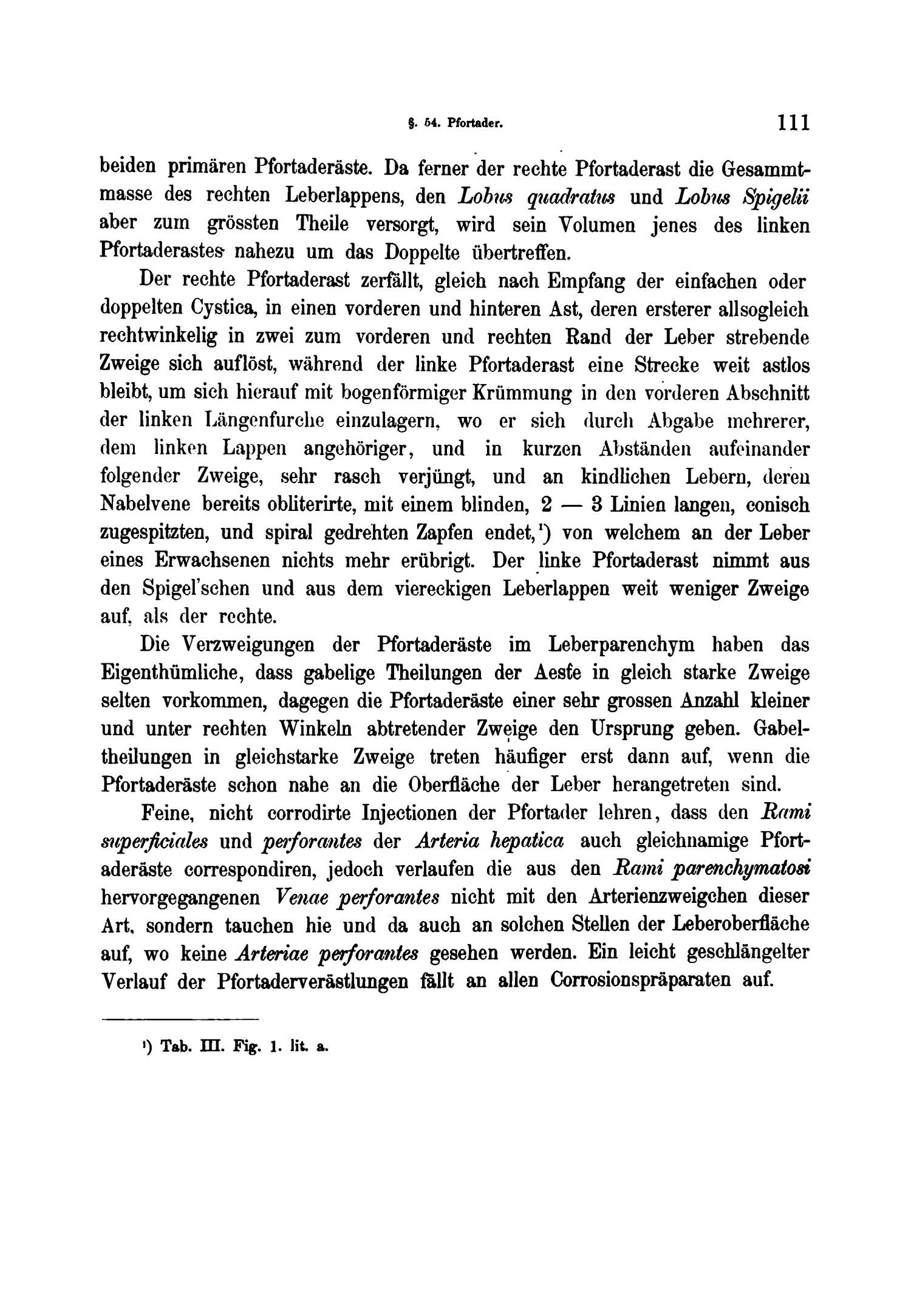Ausgezeichnet Pfortader Anatomie Ideen - Anatomie Ideen - finotti.info