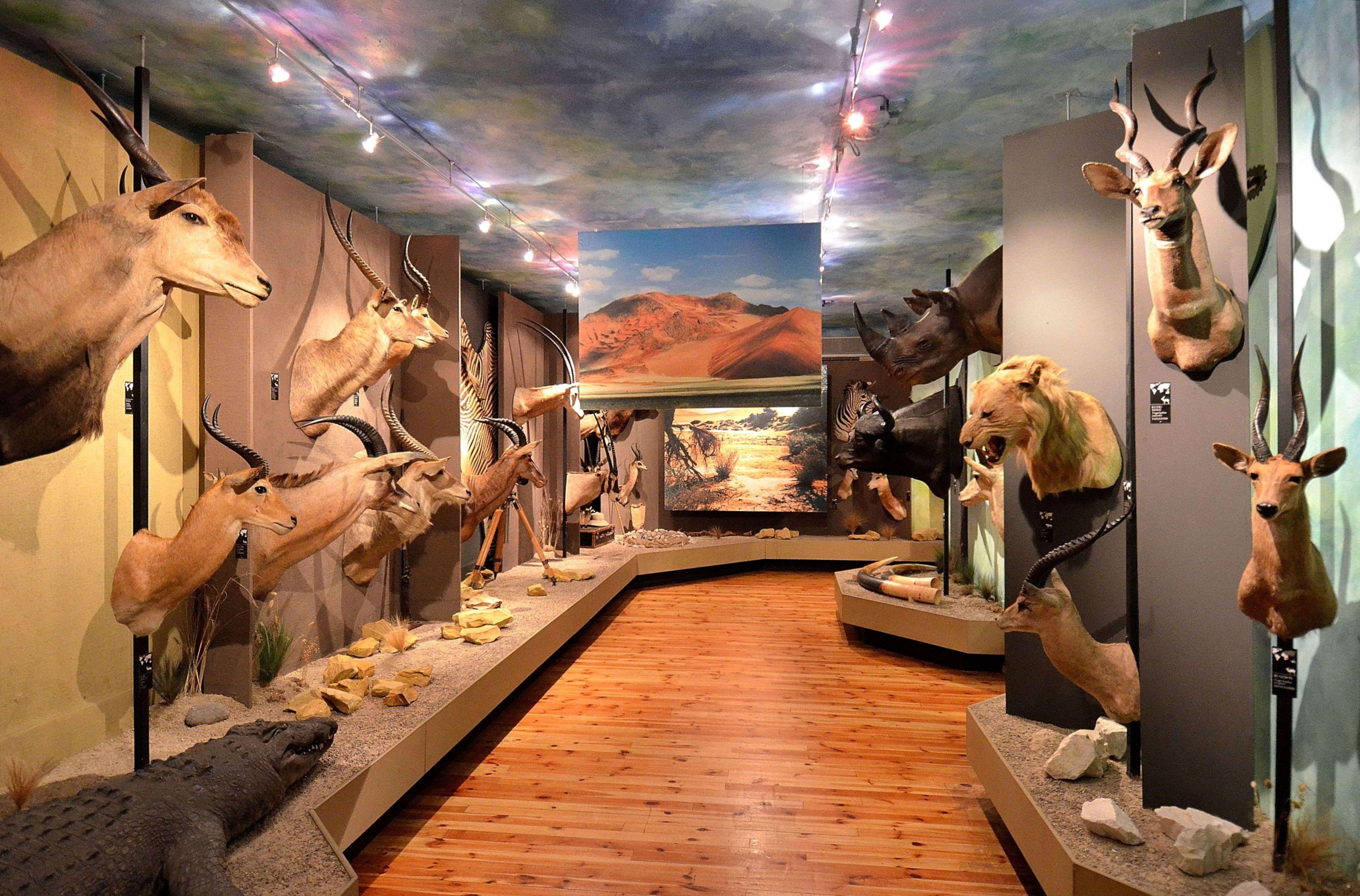 Muzeum w Wałbrzychu | Informacja turystyczna Wałbrzych