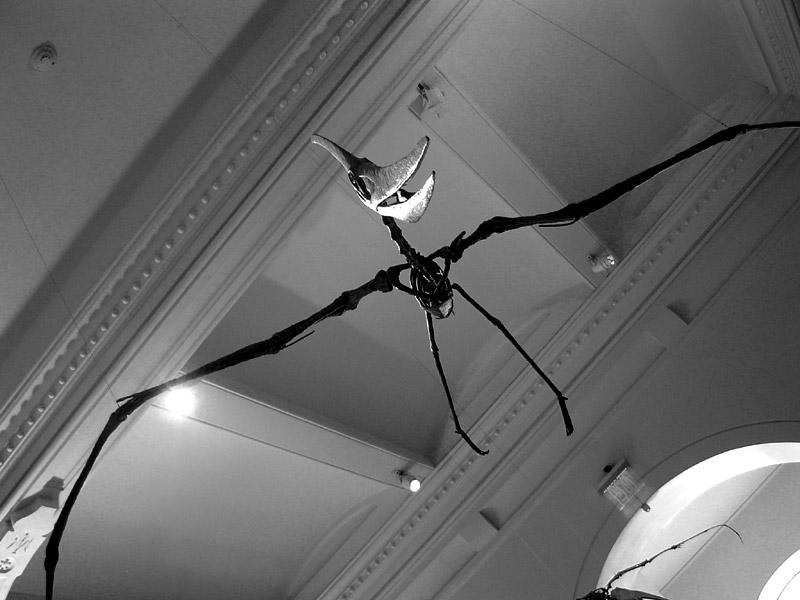 NYC pterosaur