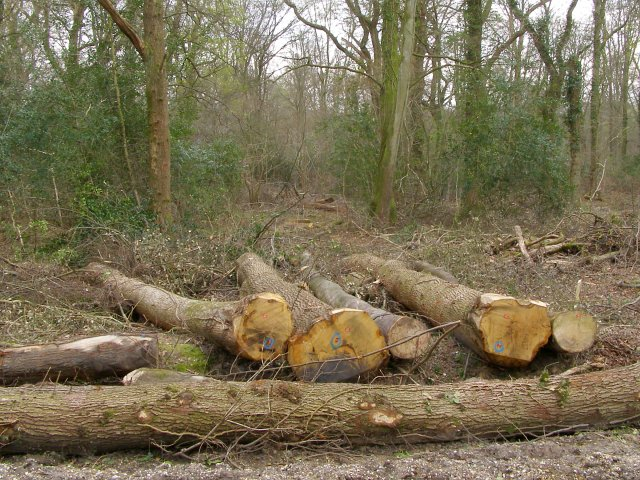 Oak timber in Pondhead Inclosure, New Forest - geograph.org.uk - 398051
