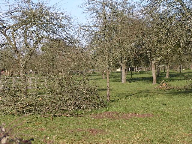 Orchard, Warham court - geograph.org.uk - 358263