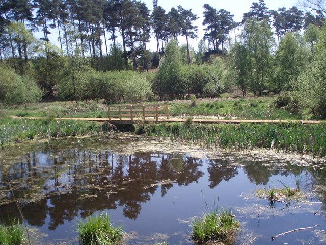 Pond, Rendlsham Forest - geograph.org.uk - 911599