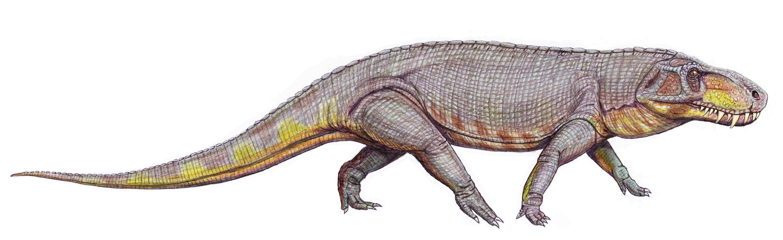 File:Prestosuchus-chiniquensis (2).jpg - Wikimedia Commons