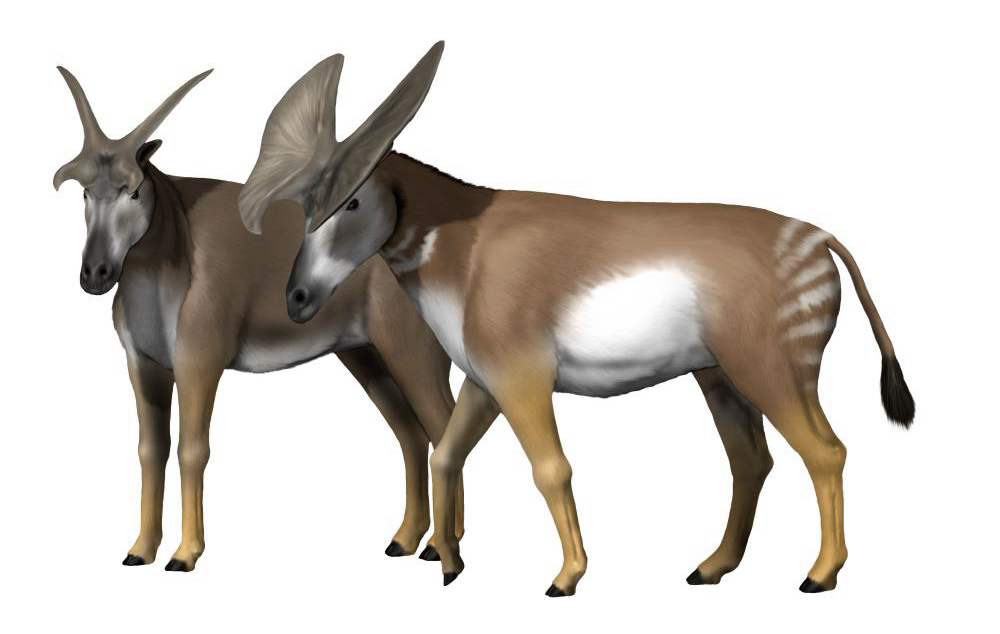 N Ungulate Prolibytherium - Wikip...