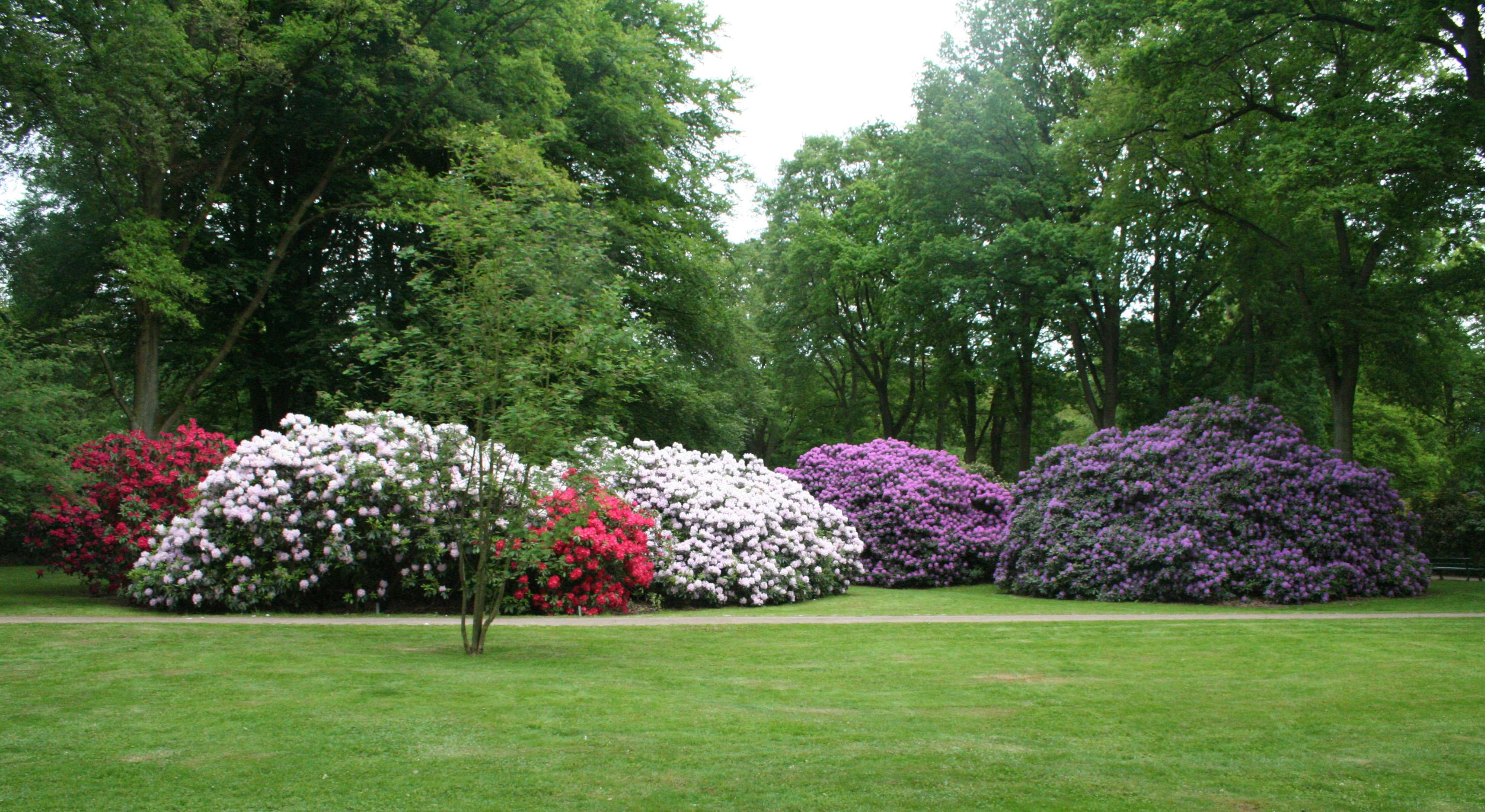 Rhododendron park bremen wikiwand for Gartengestaltung rhododendron