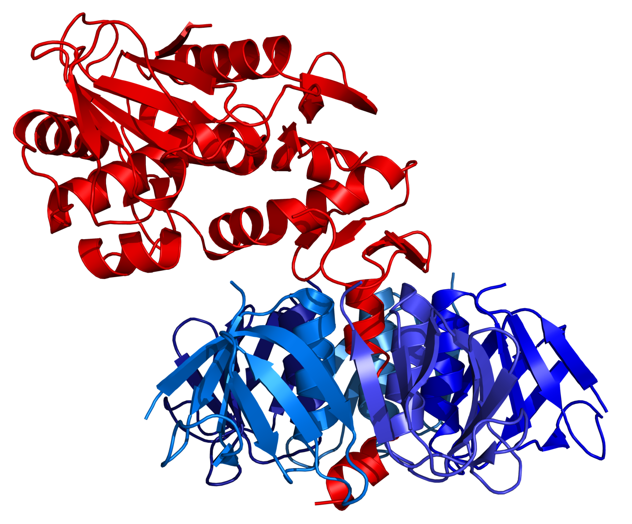 escherichia coli 0157h7 essay