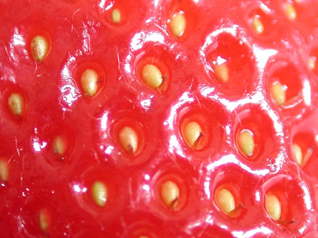 file strawberry pips     wikimedia commons