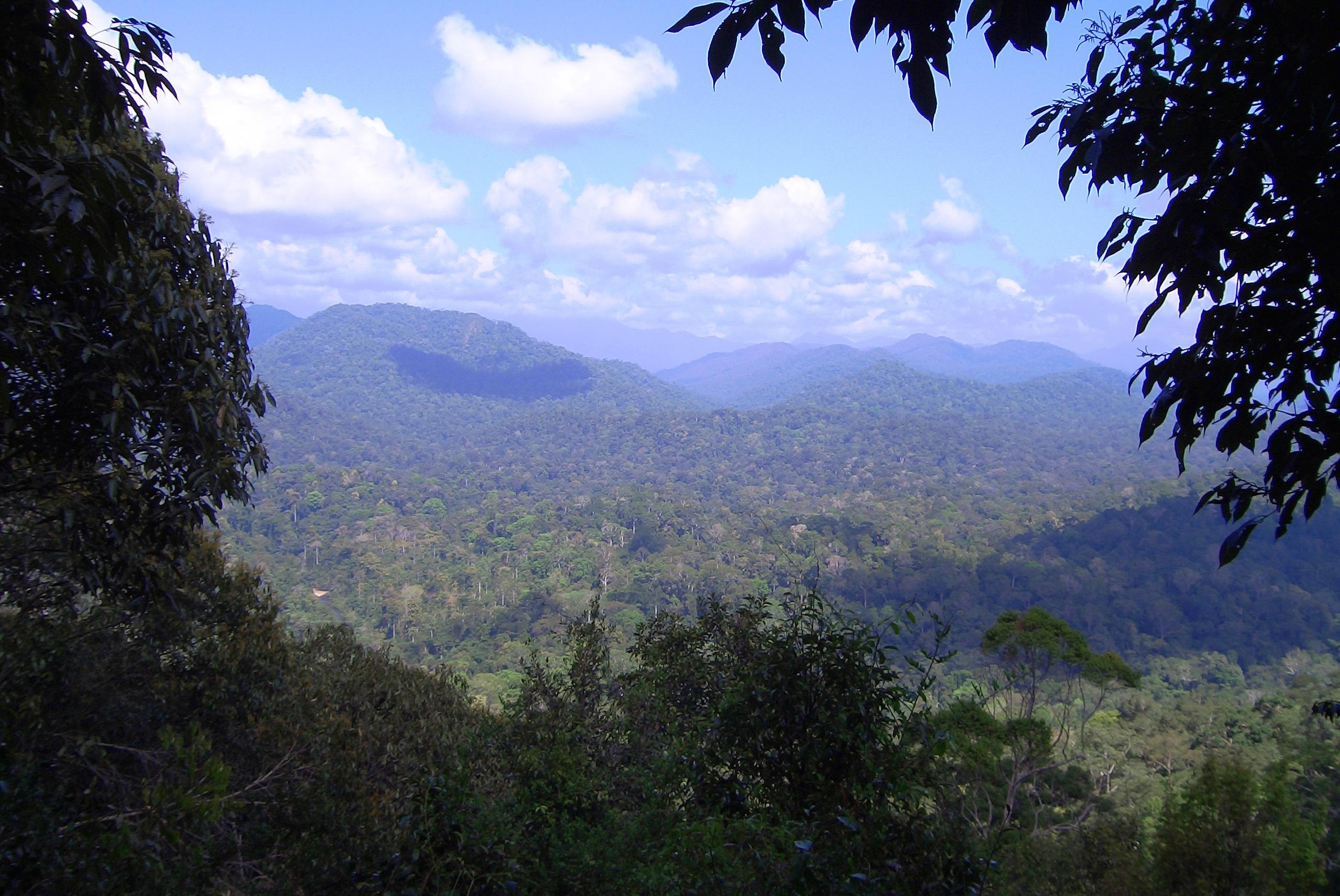 Taman Negara Malaysia  city photo : ... :Teresek Hill Taman Negara National Park Malaysia Wikipedia