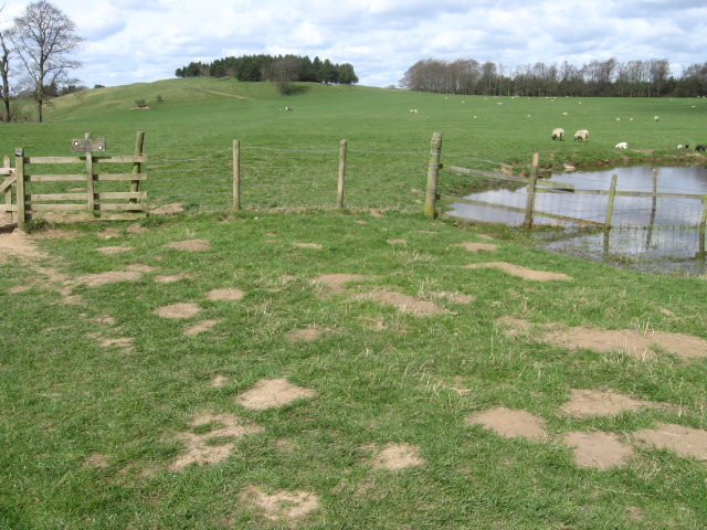 Towards Moatless Plantation on Calton Pastures - geograph.org.uk - 1237213