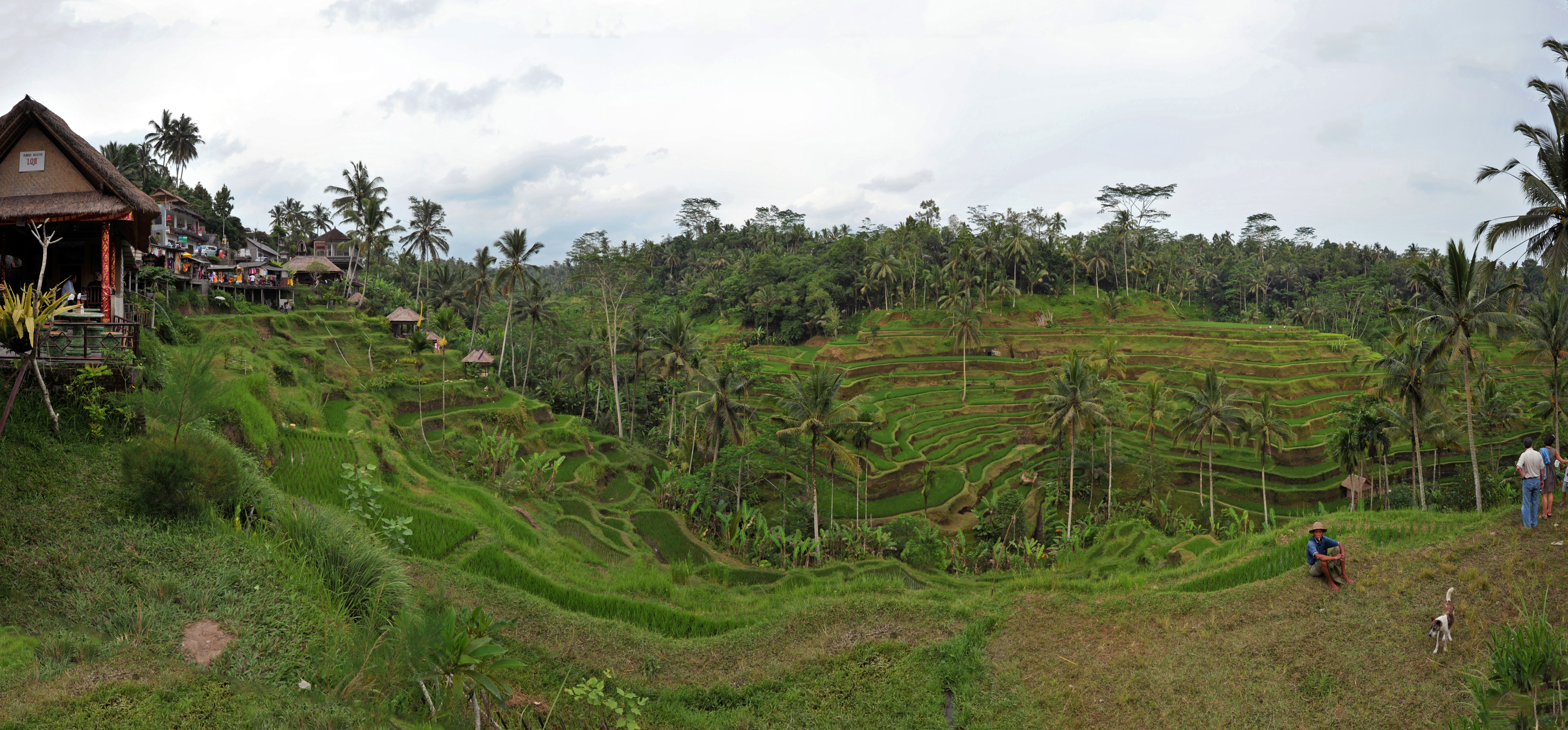 File 1 tegalalang rice terrace ubud wikimedia for Tegalalang rice terrace ubud