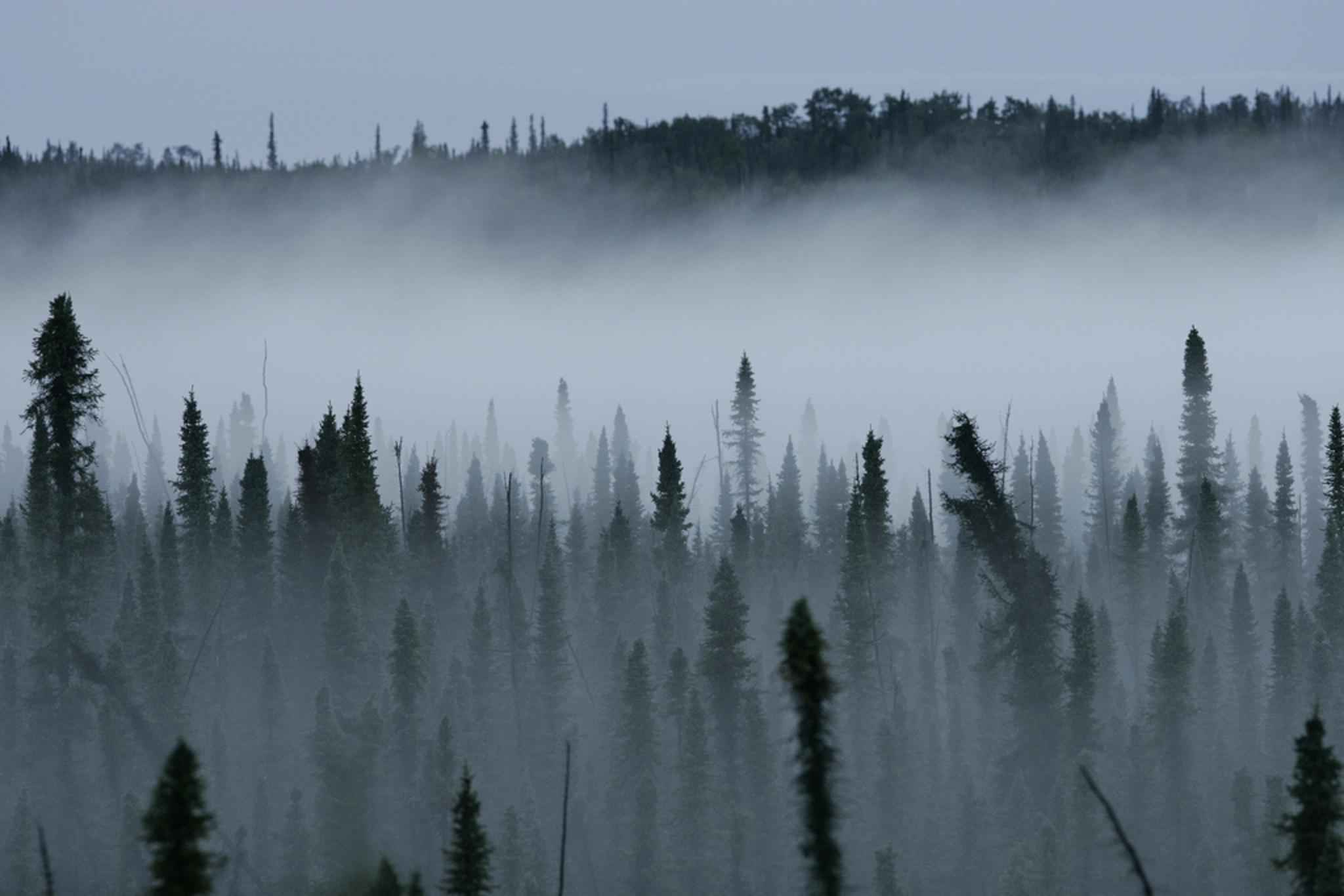 FileA Mist Rises From A Black Spruce Forest