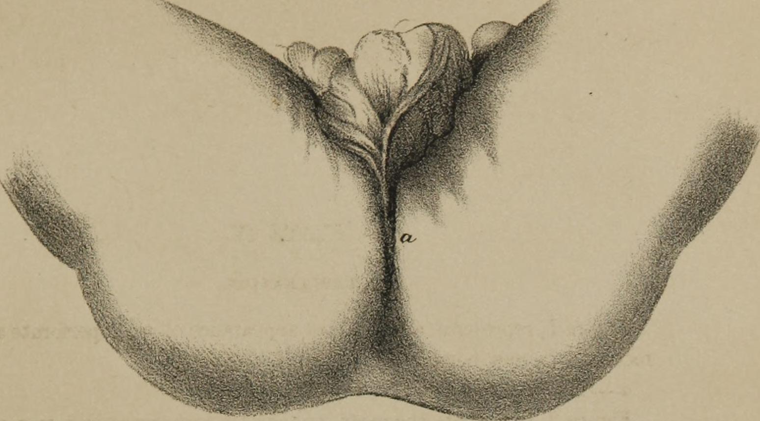 Petting crotch anus rectum, woman having a fuck