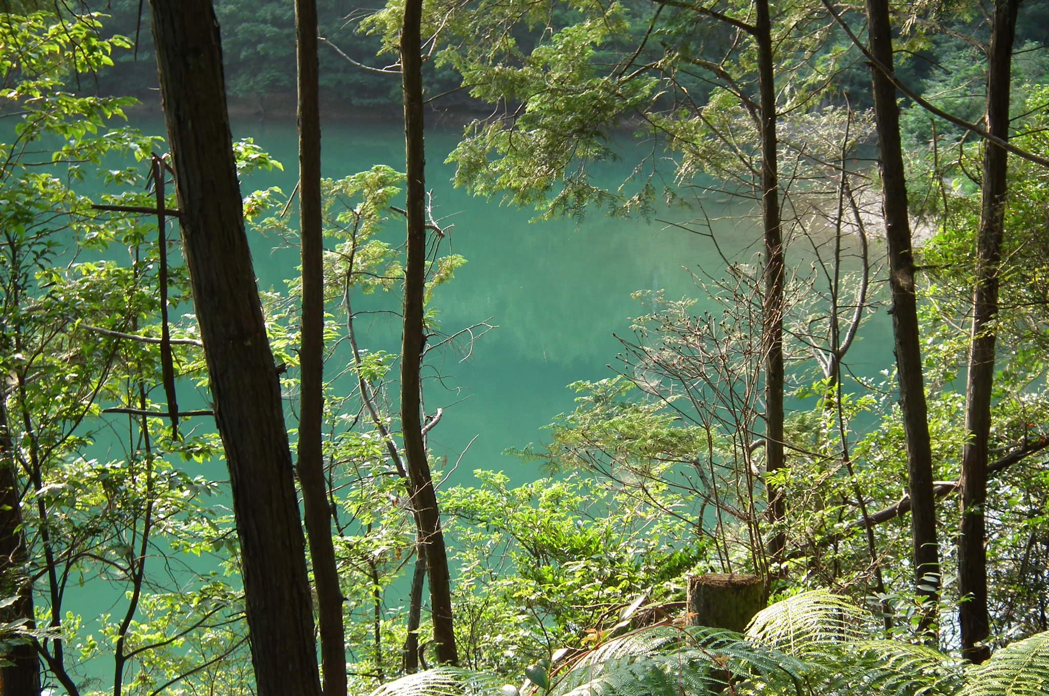 日本語: Akitani Pond Grave of the Fireflies 秋谷池(兵...