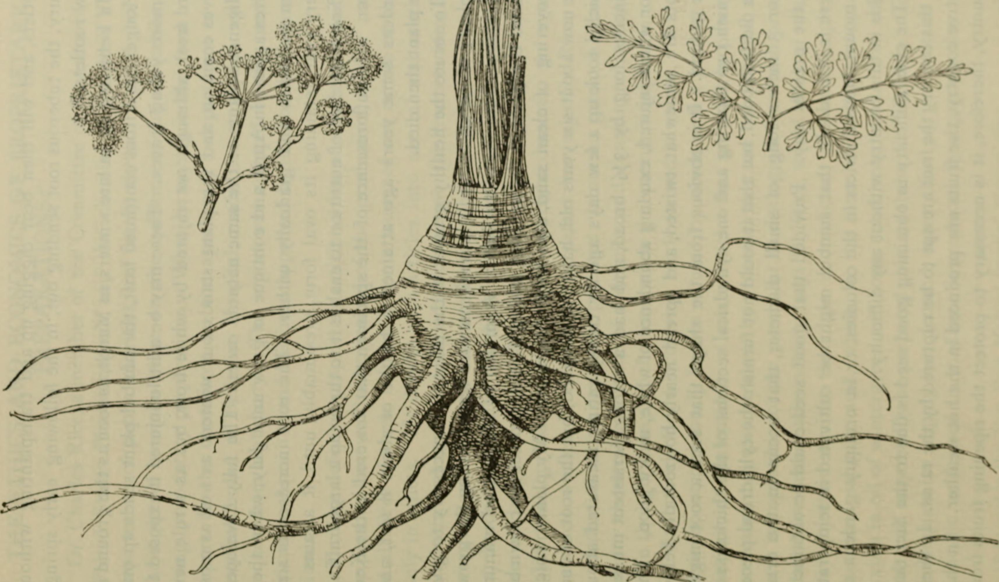 Файл:American journal of pharmacy (1829) (14796324063).jpg