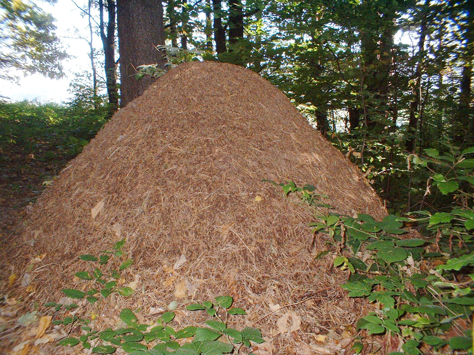 how to find ant hills
