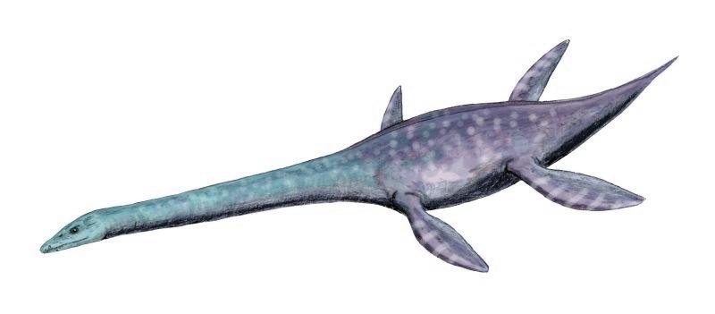 http://upload.wikimedia.org/wikipedia/commons/8/8b/Attenborosaurus_BW.jpg