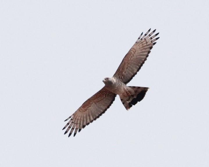 Hawk Tours