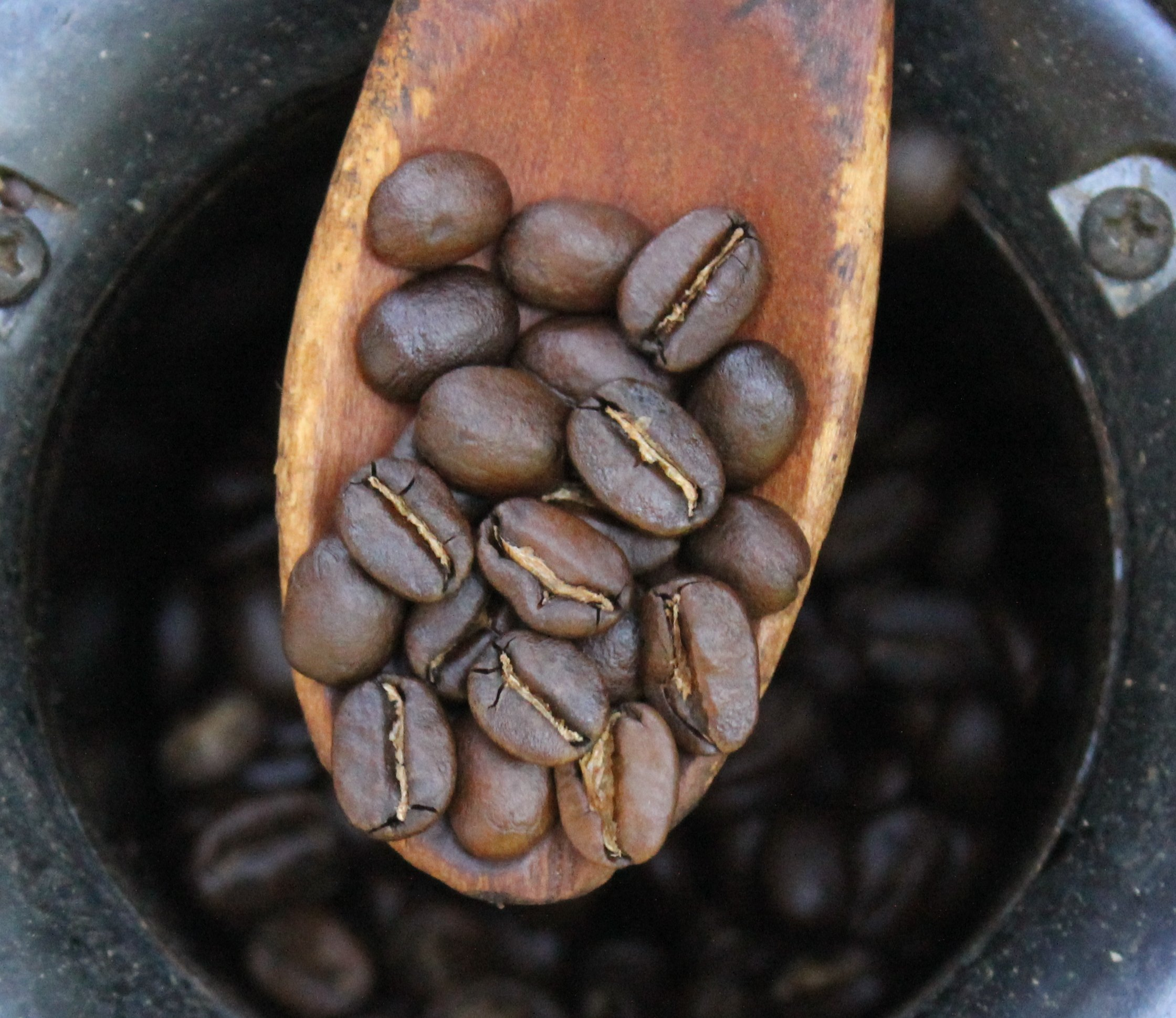 Filecoffee Roast Levels 4 The Home Roaster Color Chartg