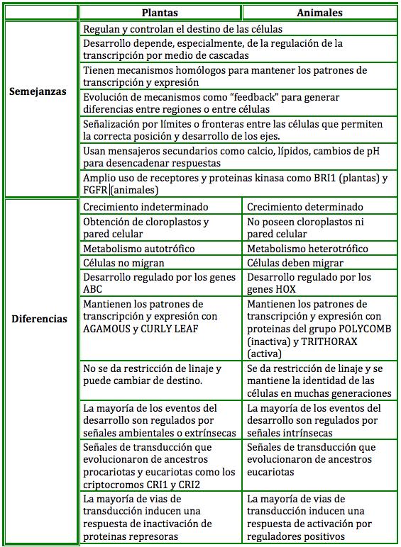 diferencias desarrollo: