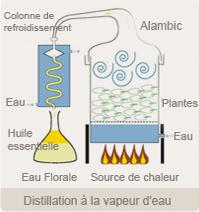 Distillation à la vapeur d'eau (Florame)
