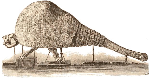 https://upload.wikimedia.org/wikipedia/commons/8/8b/Doedicurus.png