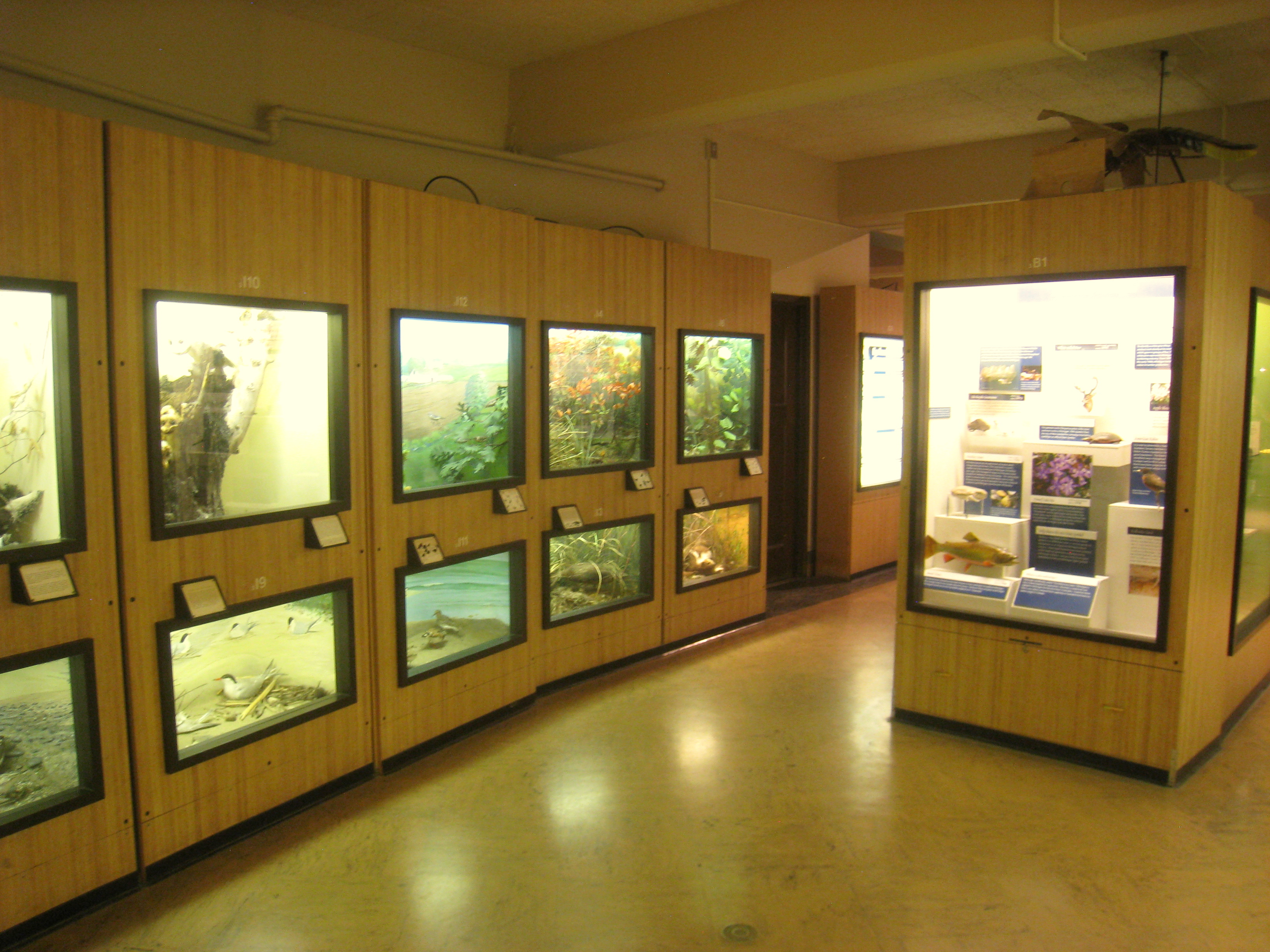 Museum Of Natural History Exhibits