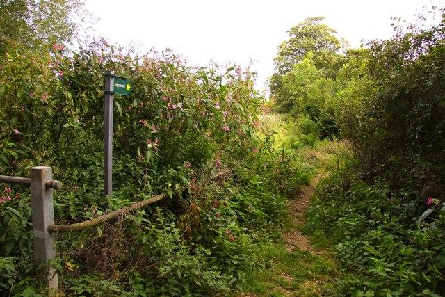 File:Footpath along Letcombe Brook - geograph.org.uk - 1472249.jpg