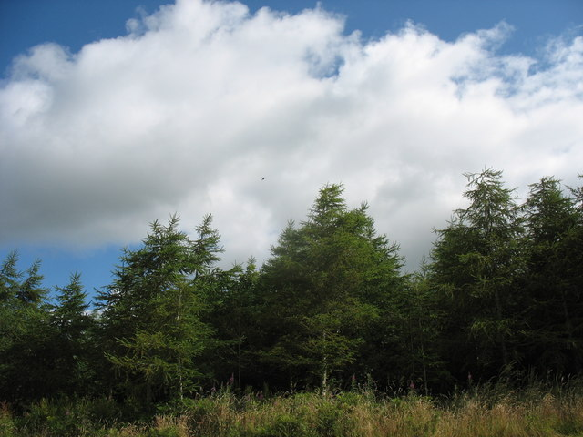 Forest at the Cefni Reservoir Park - geograph.org.uk - 1398950