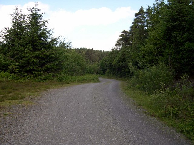 Forest track in Brechfa Forest - geograph.org.uk - 1352295