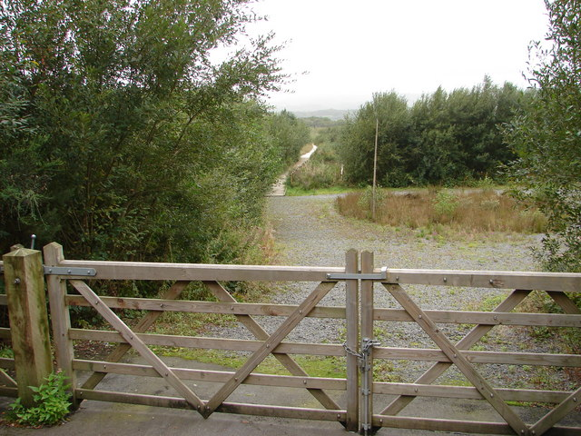 Forestry Walk - geograph.org.uk - 232219