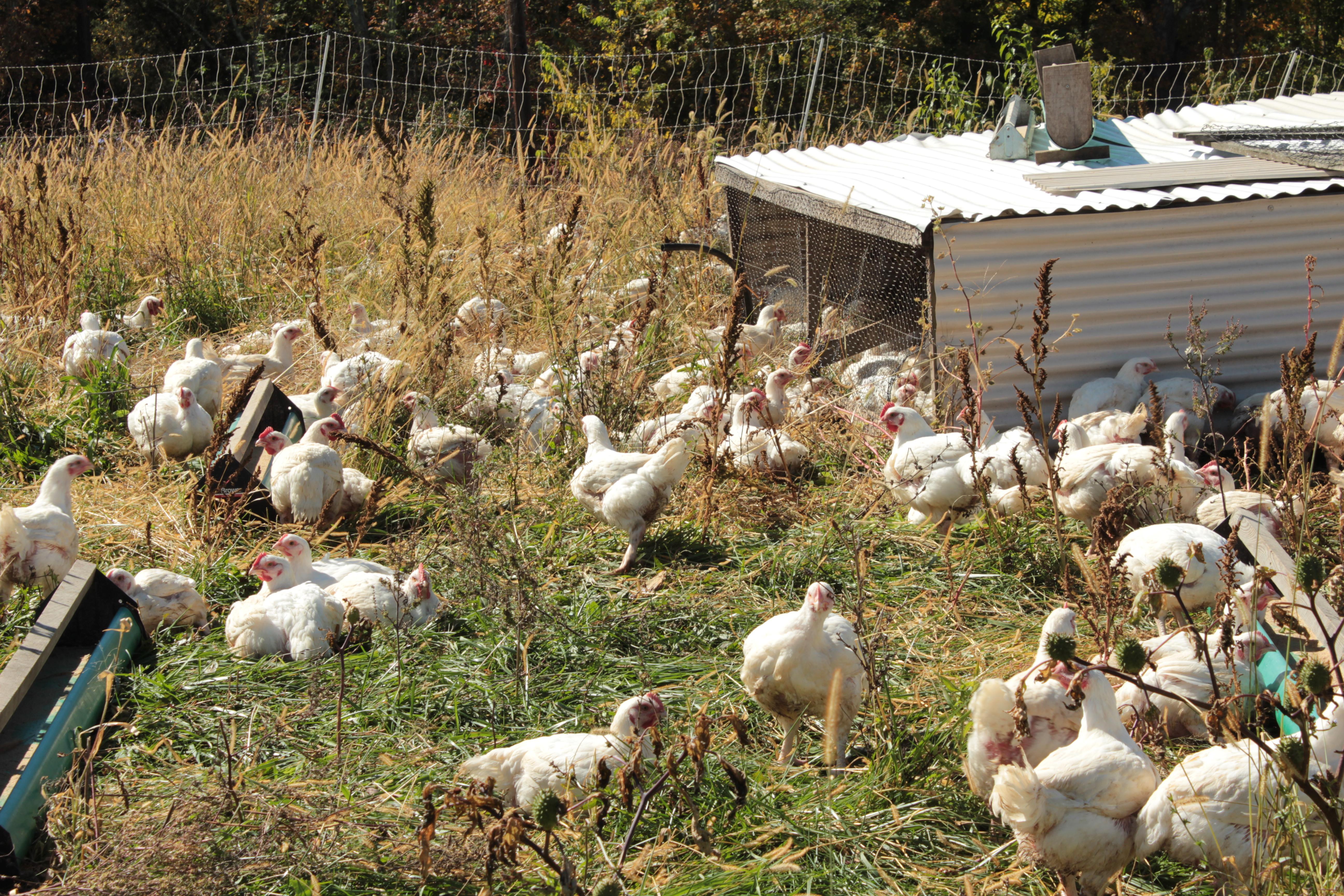 Farm Fresh Organic Food Delivery