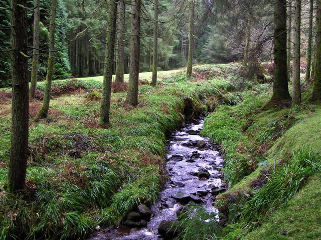 Gortin Glens Forest Park (18) Very calming amongst the trees!