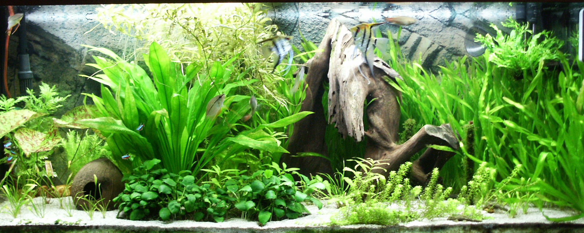 A well planted aquarium <!-- convert -->