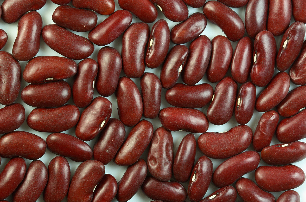 https://upload.wikimedia.org/wikipedia/commons/8/8b/Kidney_beans.jpg