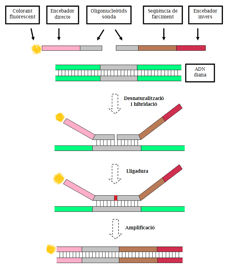 Genetics  Wikipedia