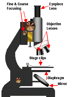 Microscope diagram 1.png