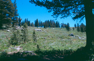 English: Mokelumne Wilderness, California US