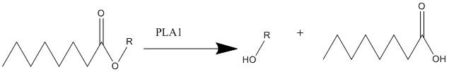 File:Phospholipase a1 mechanism.jpg