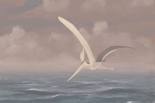 Pteranodon-sternbergi jconway