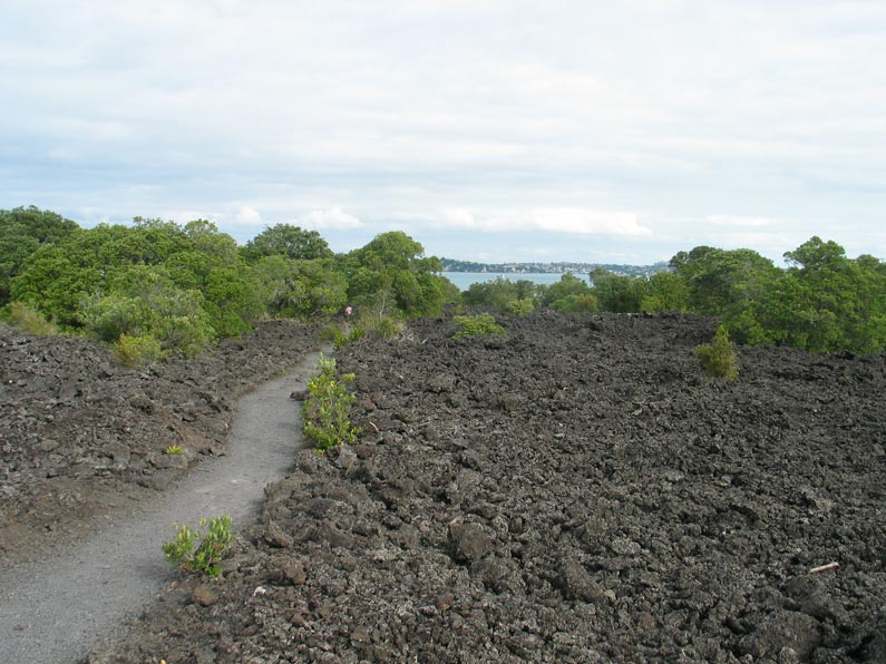 ecological succession on rangitoto island essay Rangitoto island is arguably auckland's most beloved and  various other  special ecological features, and studies on plant succession  part 1 provides a  summary of volcanic textures on rangitoto together with notes.