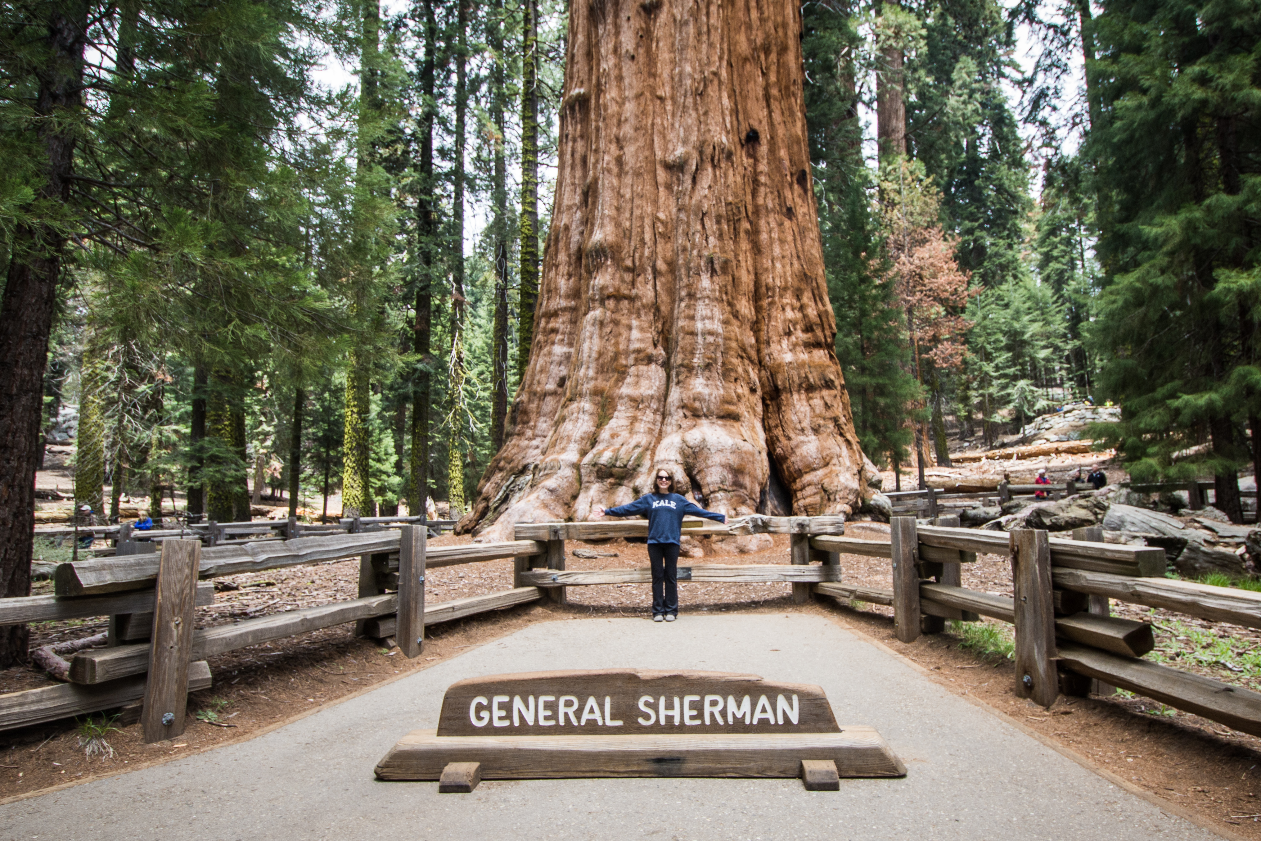 The General Sherman tree - Sequoia National Park (33241877800).jpg
