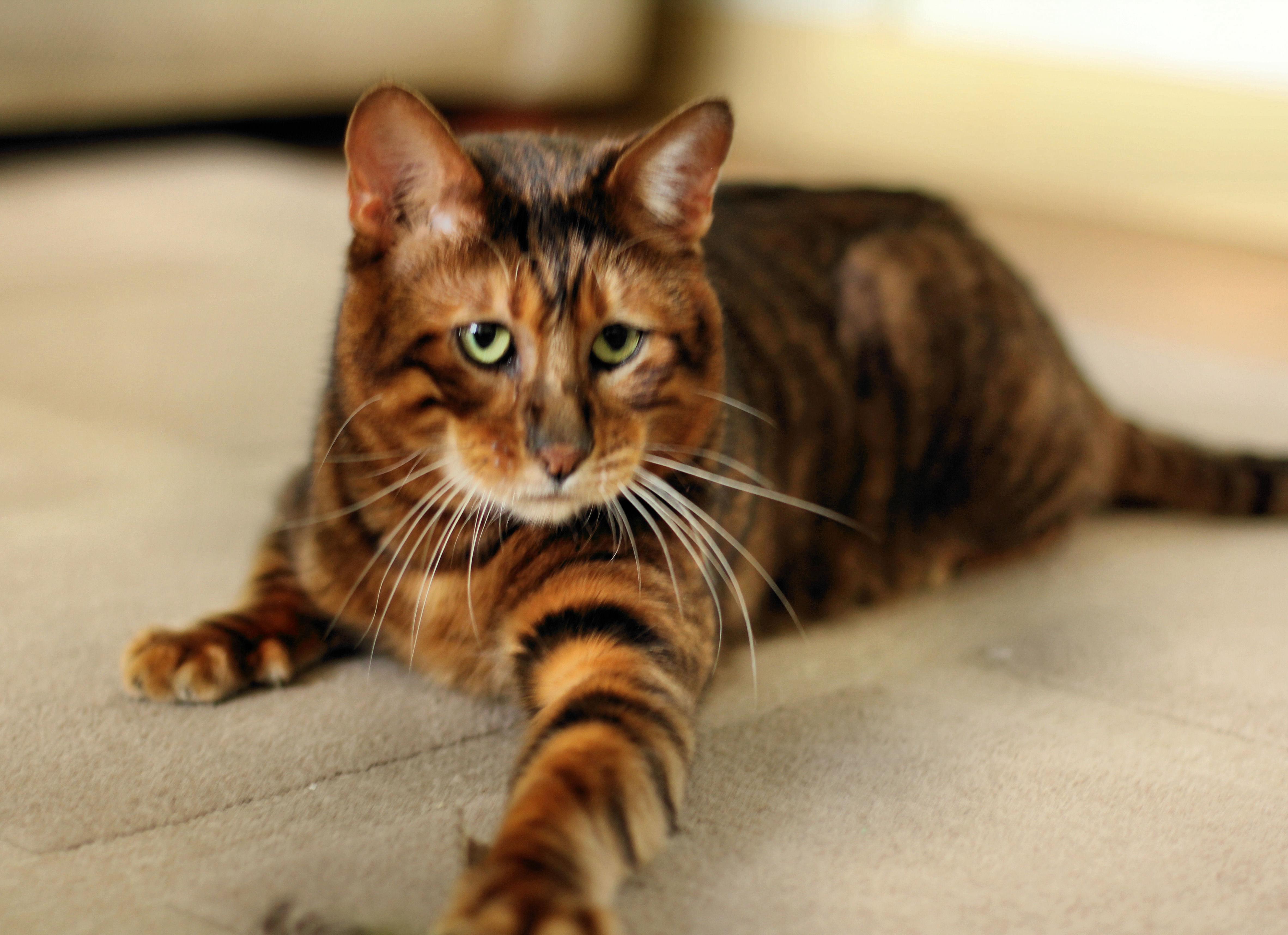 black kitten with blue eyes