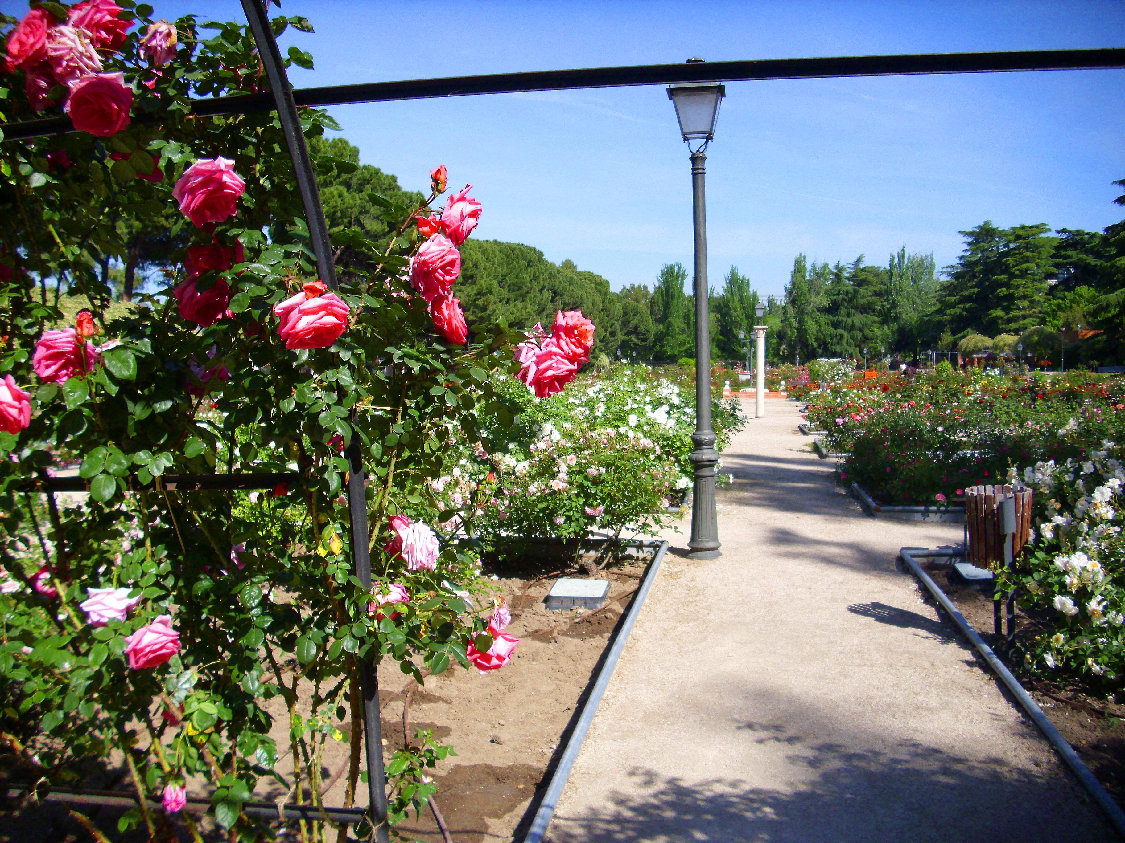 Resultado de imagen de rosaleda parque del oeste