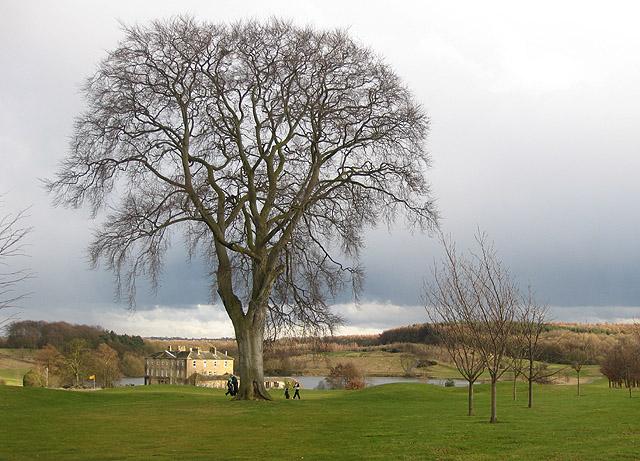 Walton Hall, dwarfed by a giant beech tree - geograph.org.uk - 1772697