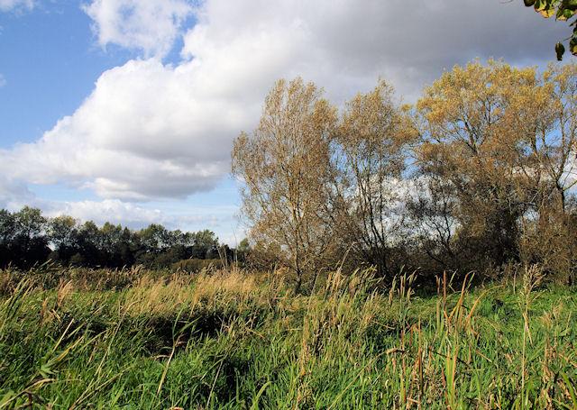 Winnall Moors - geograph.org.uk - 1021052