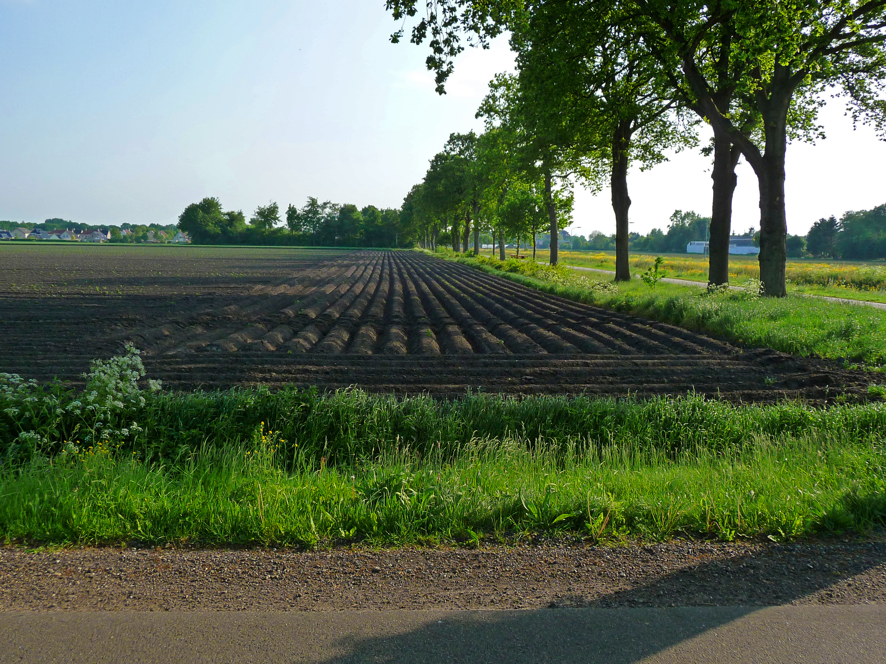 File A Fresh Prepared Agriculture Field For Crops In
