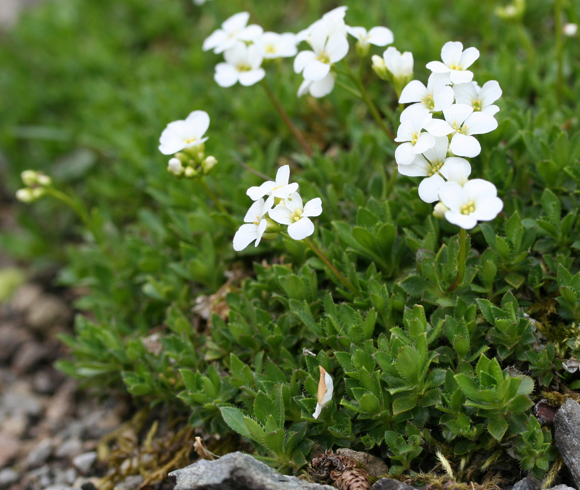 White Flowers And Their Names 3472607 Sciencemadesimplefo