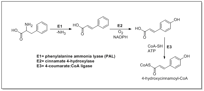 Enzymes Associated With Biosynthesis Of Hydroxycinnamic Acidsedit