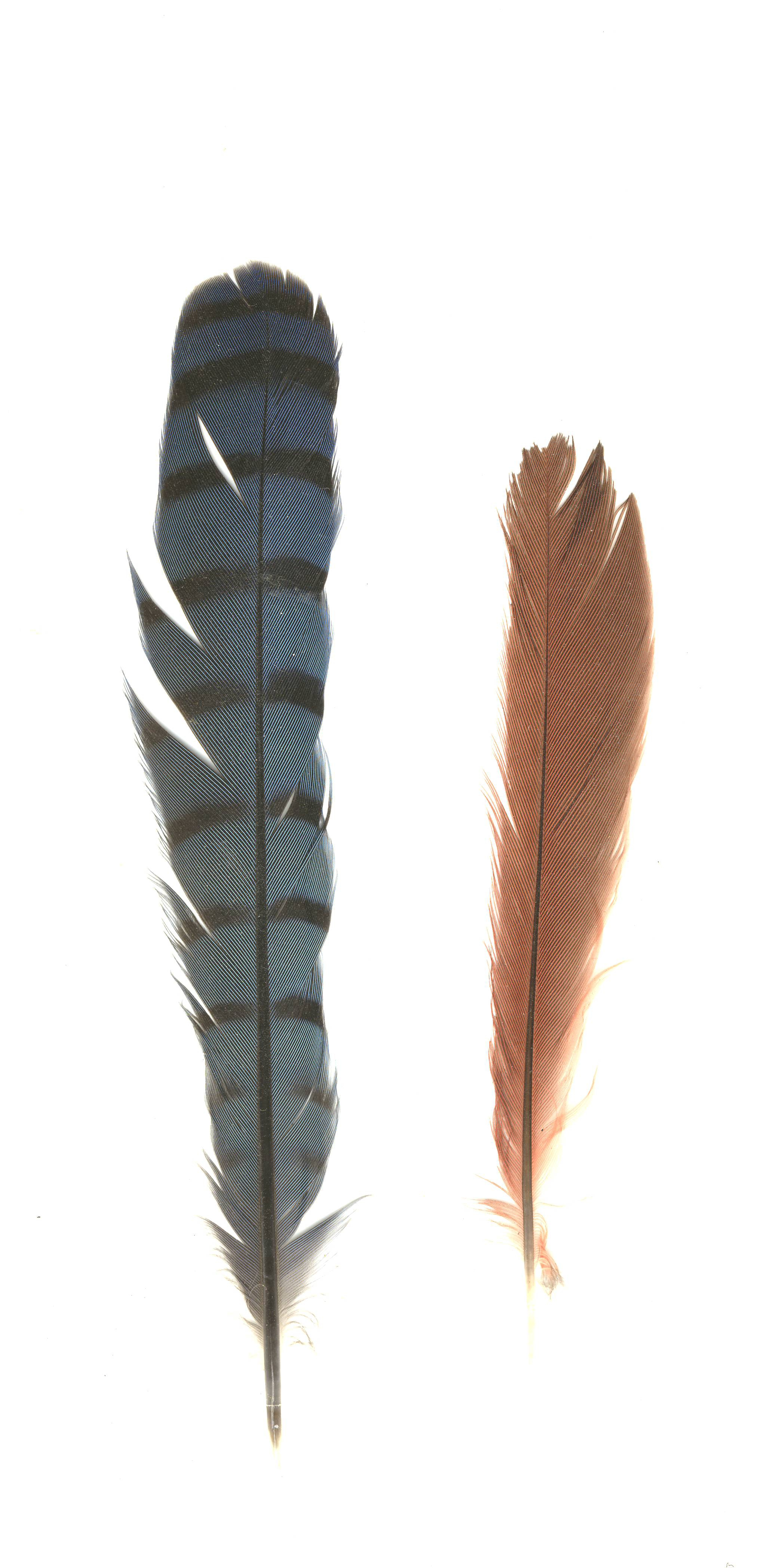 Plume blue dating